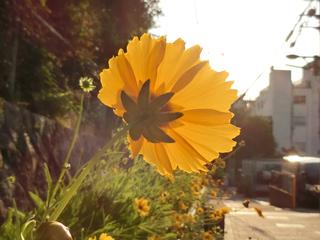 黄色い花〜〜