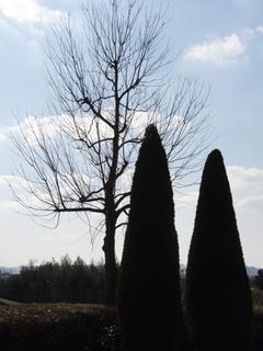 木たちです